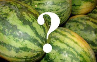 Die Wassermelone Ist Ein Gemüse