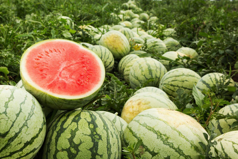 reife Wassermelonen