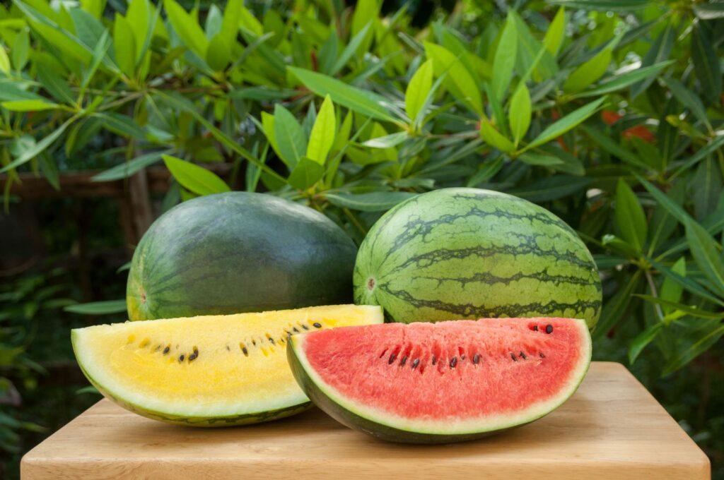 Wassermelonensorten: Biodiversität und Sorten für Deutschland