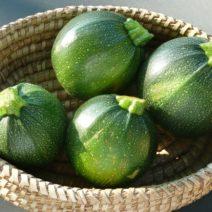 die zucchini und das t dliche cucurbitacin plantura. Black Bedroom Furniture Sets. Home Design Ideas