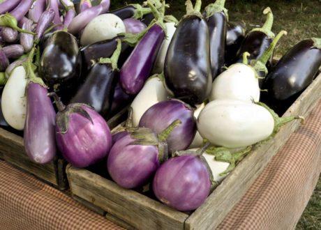 Schwarze Weiße Violette Auberginensorten Artenvielfalt