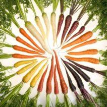 Karotten Vielfalt Aus Dem Eignen Garten