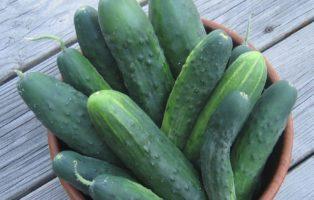 Chinakohl: Die Richtige Sorte Zum Anbauen Wählen - Plantura Chinakohl Pflanzen Tipps Garten Pflege