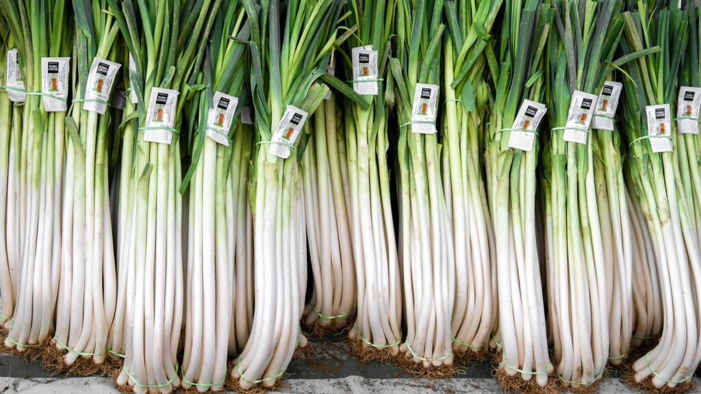 Ackerlauch Allium ampeloprasum Slow Food Ernte