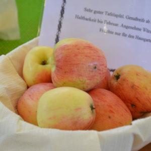 Apfel Alantapfel (2)
