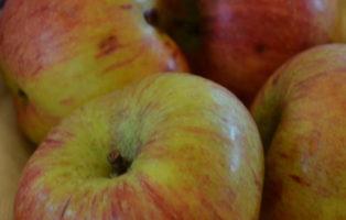 Apfel Altländer Pfannkuchenapfel