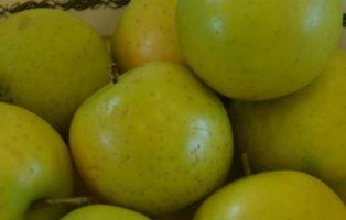 Apfel Ananasrenette