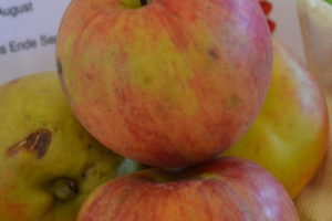 Apfel Arkcharm