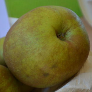 Apfel Coulons Renette