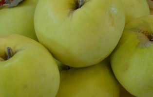 Apfel Croncels