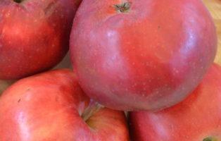 Apfel Danzinger Kantapfel