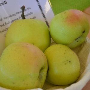 Apfel Gloria Mundi (2)