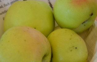 Apfel Gloria Mundi