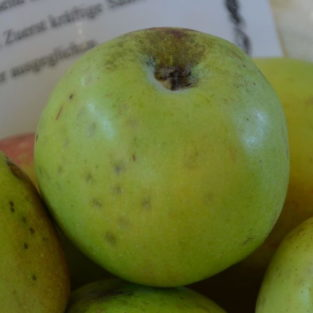 Apfel Großer Rheinischer Bohnapfel