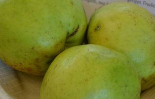 Apfel Hausmütterchen