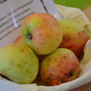 Apfel Hildesheimer Goldrenette (2)