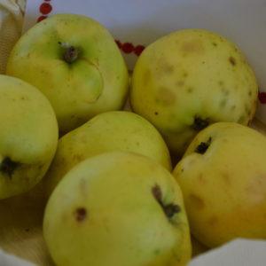 Apfel Holsteiner Zitronenapfel