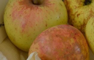 Apfel Lütticher Ananaskalvill
