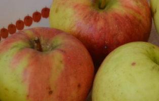 Apfel Luna