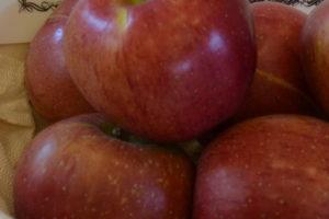 Apfel Melrose