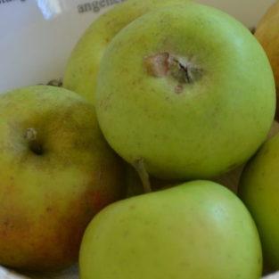 Apfel Oberdiecks Renette