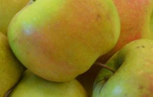 Apfel Remo