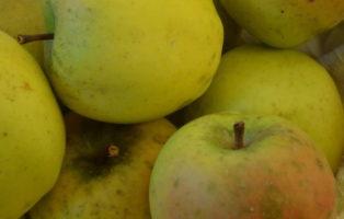 Apfel Resista