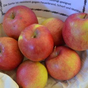 Apfel Rewena (1)