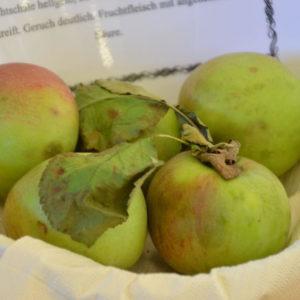 Apfel Rheinische Schafsnase (1)