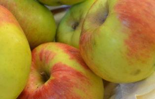 Apfel Rheinischer Winterrambur