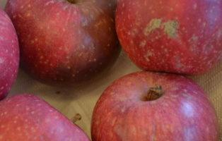 Apfel Rote Sternrenette