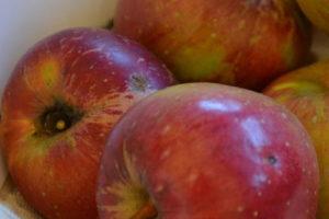 Apfel Roter Eiserapfel