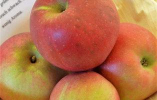 Apfel Roter Stettinger