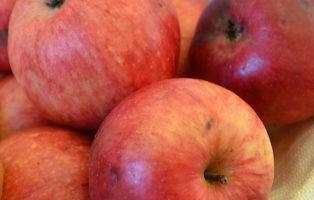 Apfel Ruhm Von Kirchwerder