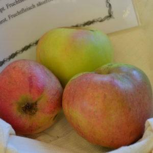 Apfel Sonnenwirtsapfel (2)