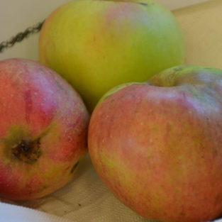 Apfel Sonnenwirtsapfel