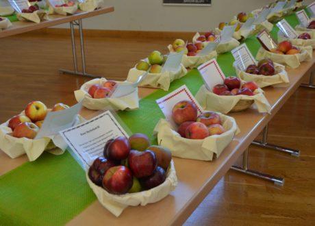 Apfel: Sortenvielfalt Und Biodiversität Des Malus Domestica