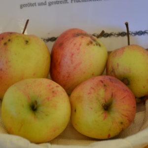Apfel Steierische Schafsnase (2)