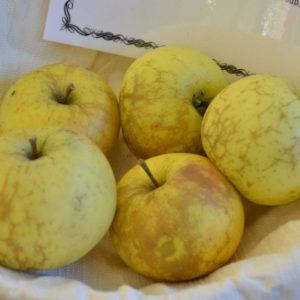 Apfel Wachsrenette Von Benediktbeuren