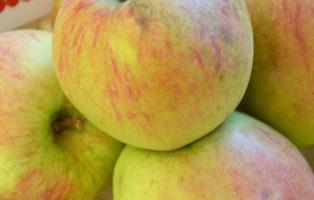 Apfel Weißer Matapfel