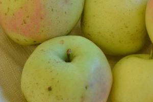 Apfel Winterbananenapfel