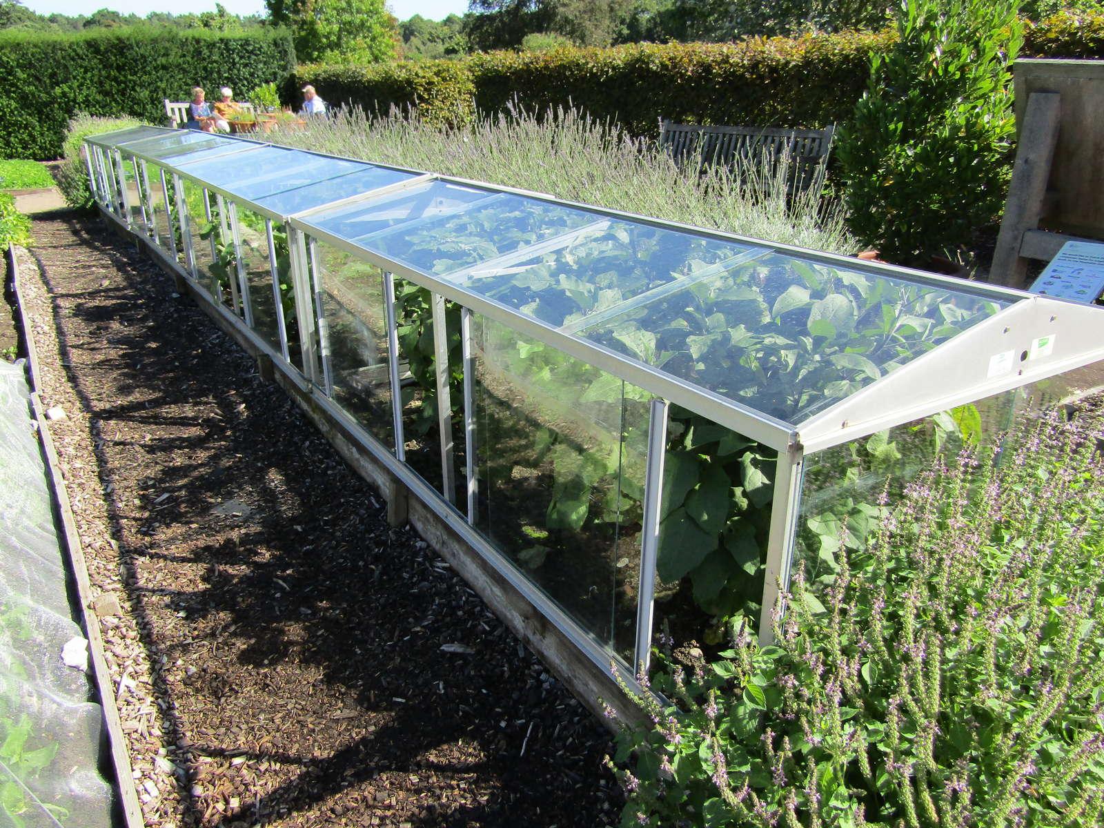 Aubergine Anbauen Tipps Vom Experten Plantura