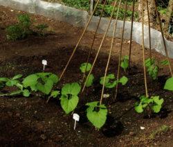 Bohne Rankhilfe Im Garten