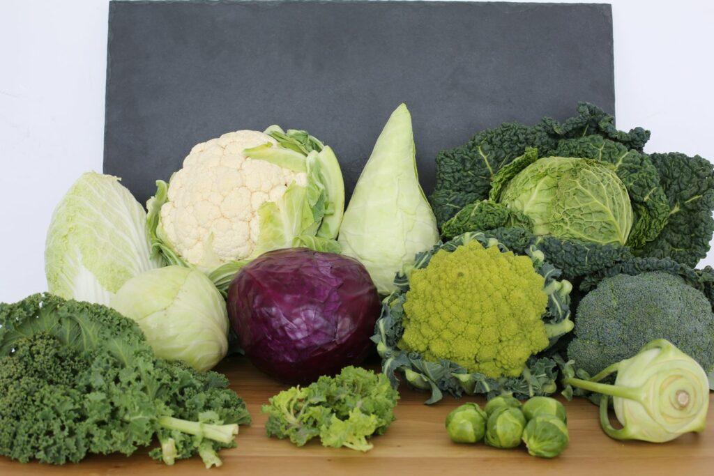 Verschiedene Kohlarten mit Bezug zur Sorten- und Artenvielfalt des Gemüsekohls