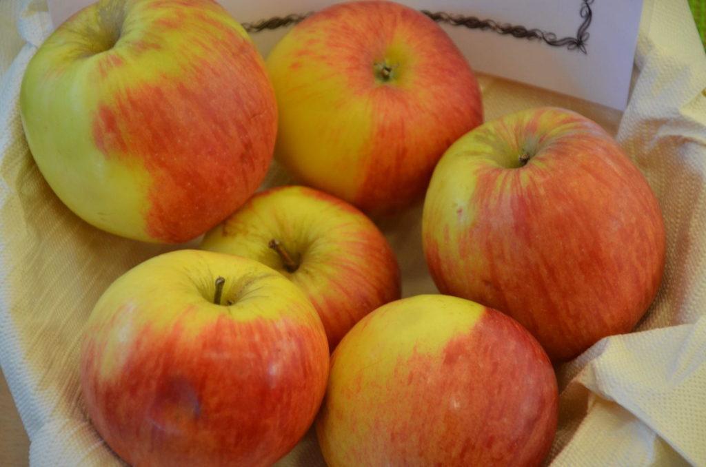 Apfelsorte Reglindis in einer Schale