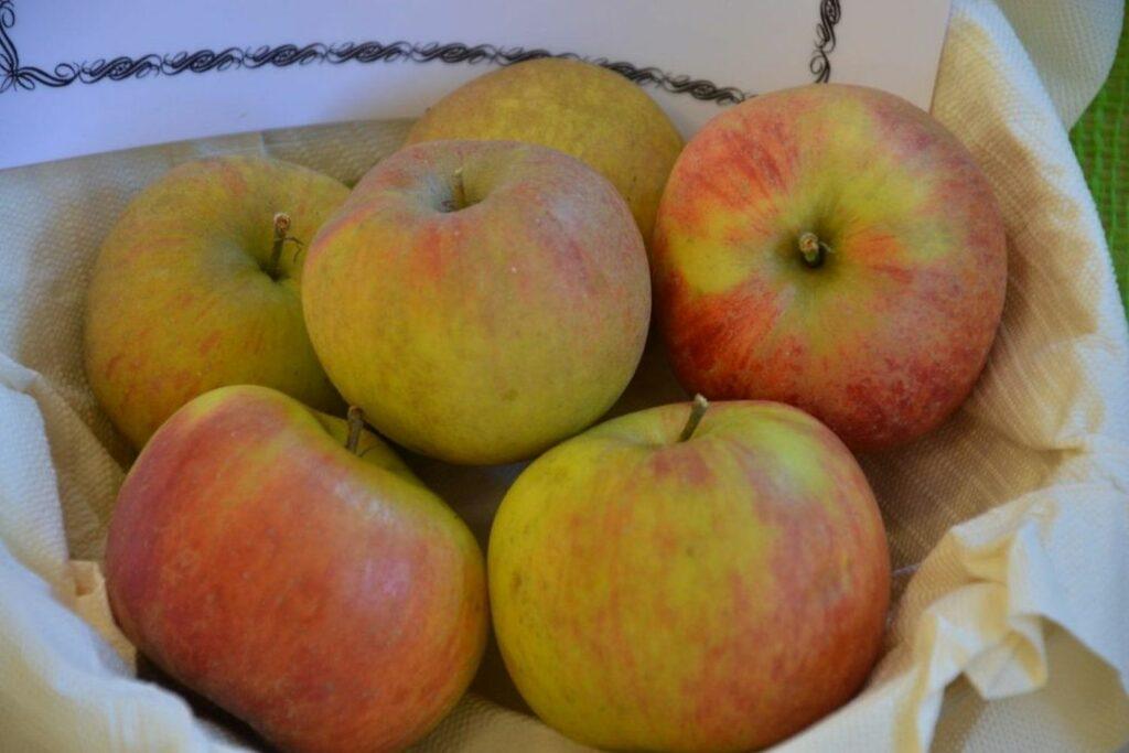 Ribston-Pepping-Äpfel in einer Schüssel