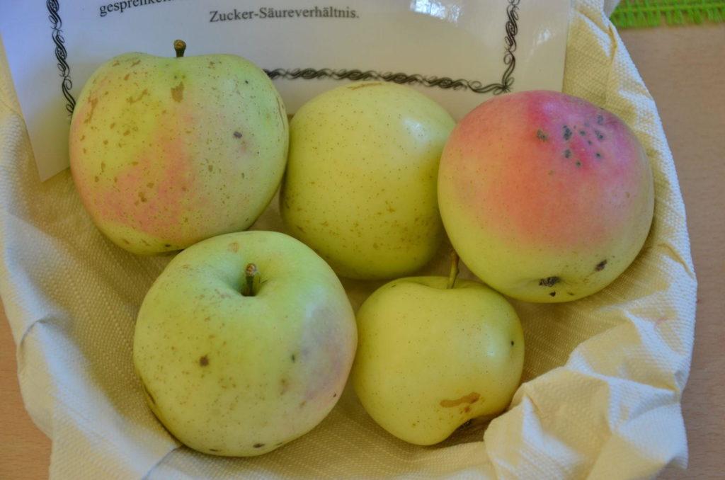 Äpfel der Sorte Winterbananenapfel in einer Schüssel