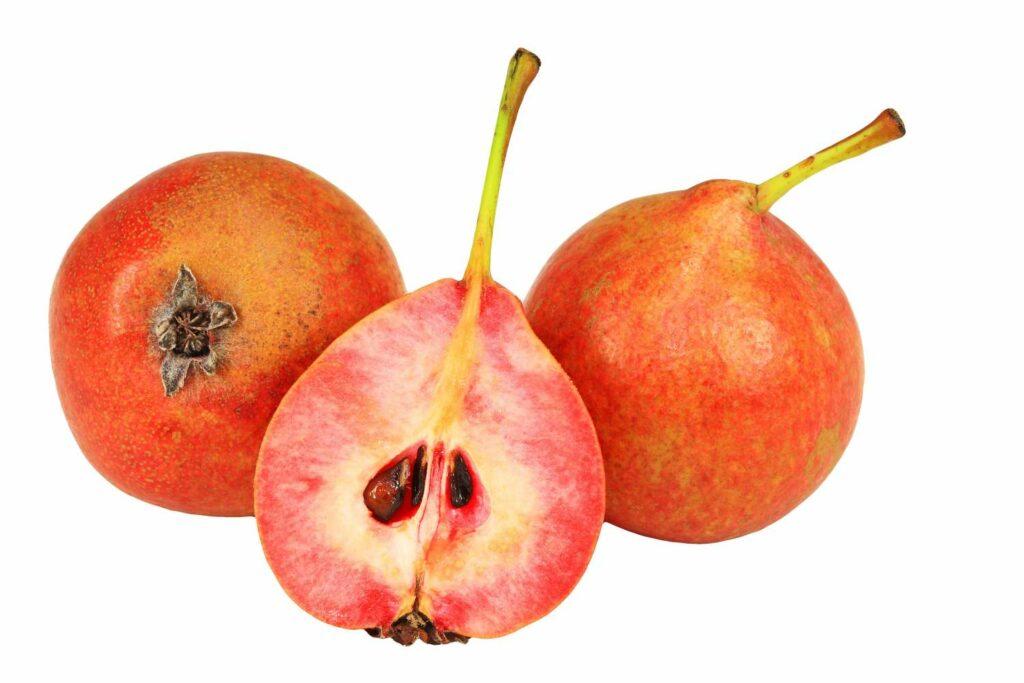 Birnensorte Blutbirne