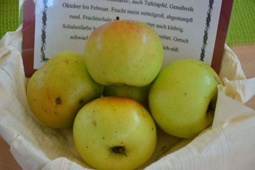 Äpfel der Sorte Landsberger Renette in einer Schüssel