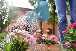 Pflanzen Im Garten Werden Mit Gießkanne Gegossen